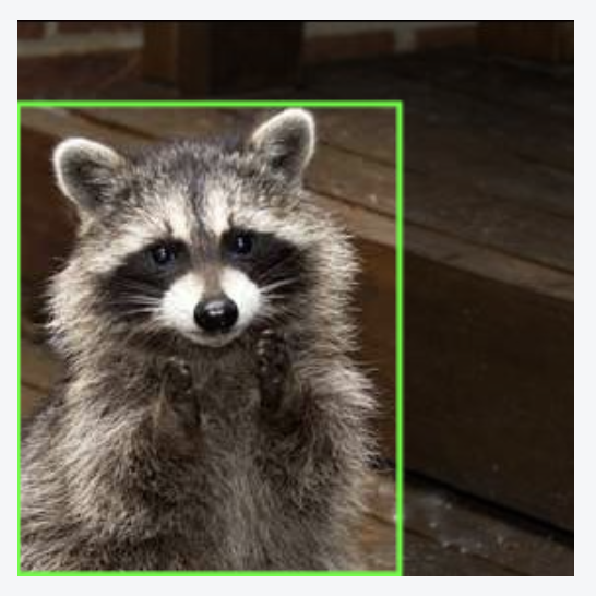 Cropped photo of a raccoon annotated with a green bounding box.