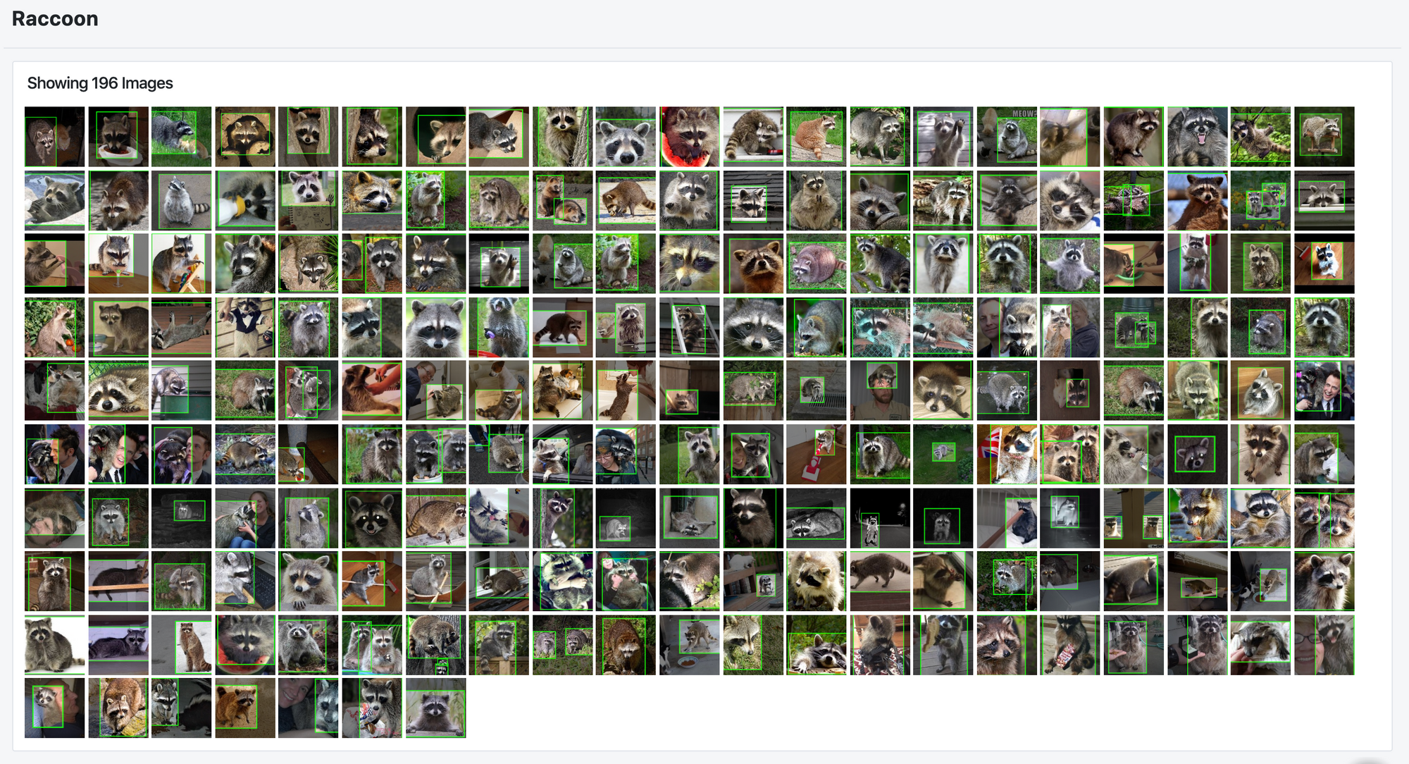 Roboflow screenshot: 196 processed images of raccoons with bounding boxes.