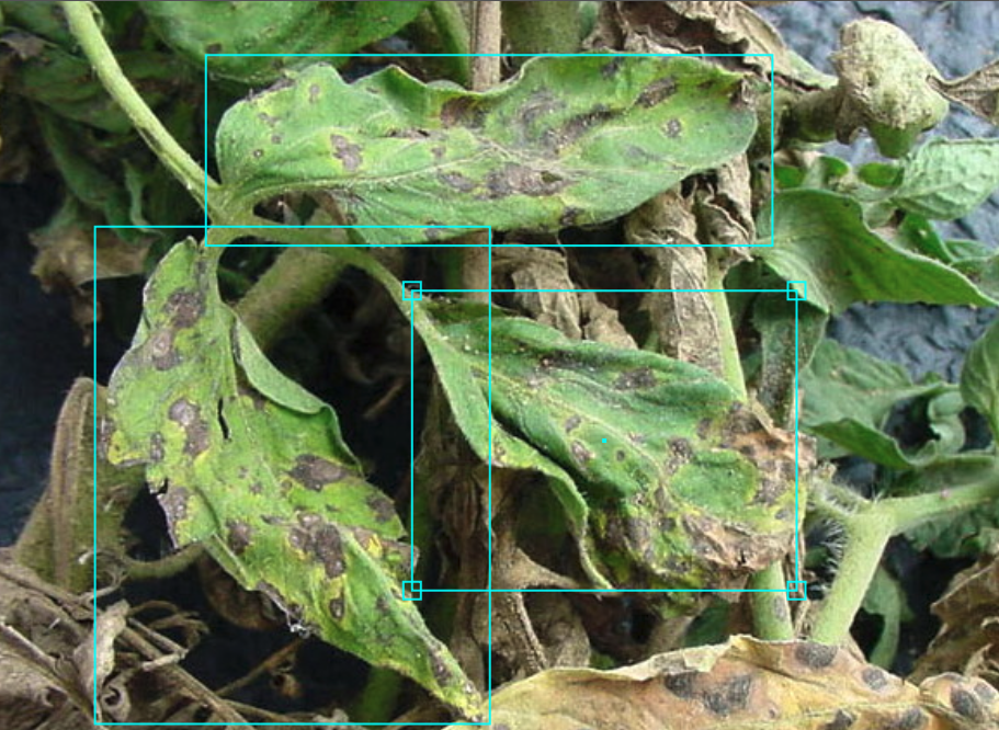 Introducing an Improved PlantDoc Dataset for Plant Disease Object Detection