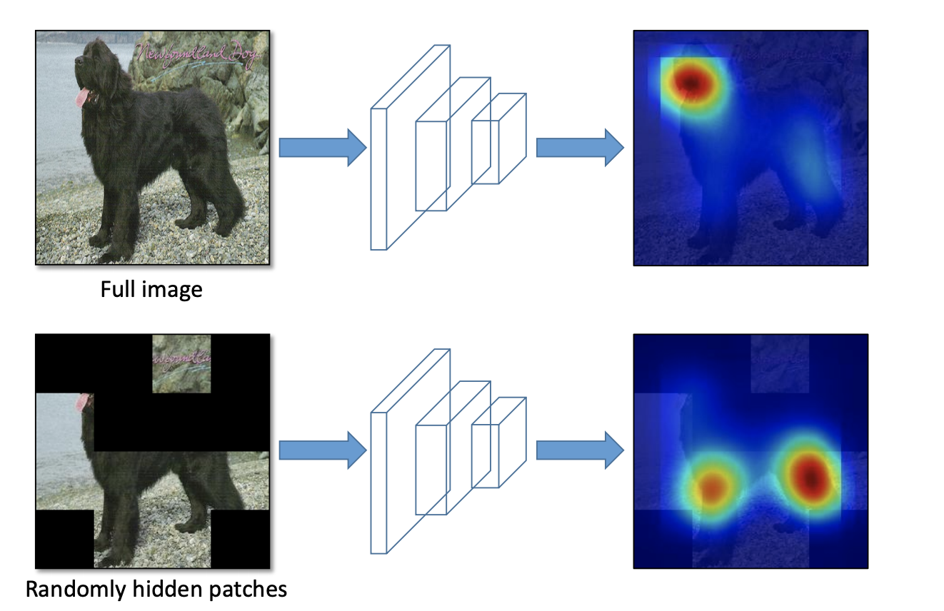 Full image, randomly hidden patches, with arrows pointing at a heat map of convolutional neural network attention.