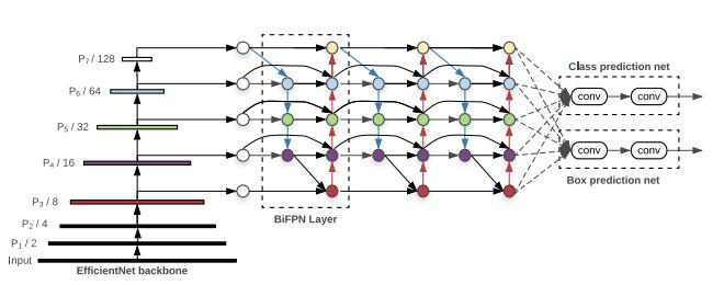 EfficientNet Backbone dialog feeding into BiFPN Layer feeding class prediction conv net and box prediction net.