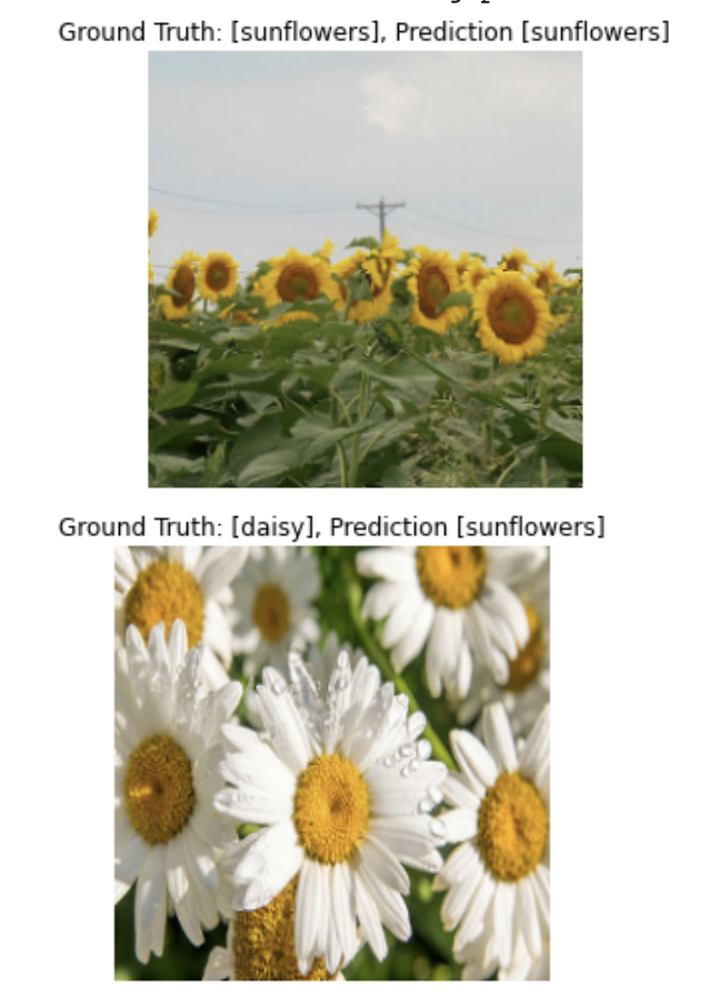 Two example images 1: Ground Truth: [sunflowers], Prediction [sunflowers], 2: Ground Truth: [daisy], Prediction [sunflowers]
