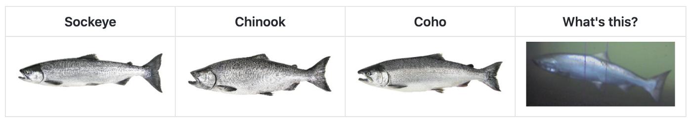 Multiple types of salmon.