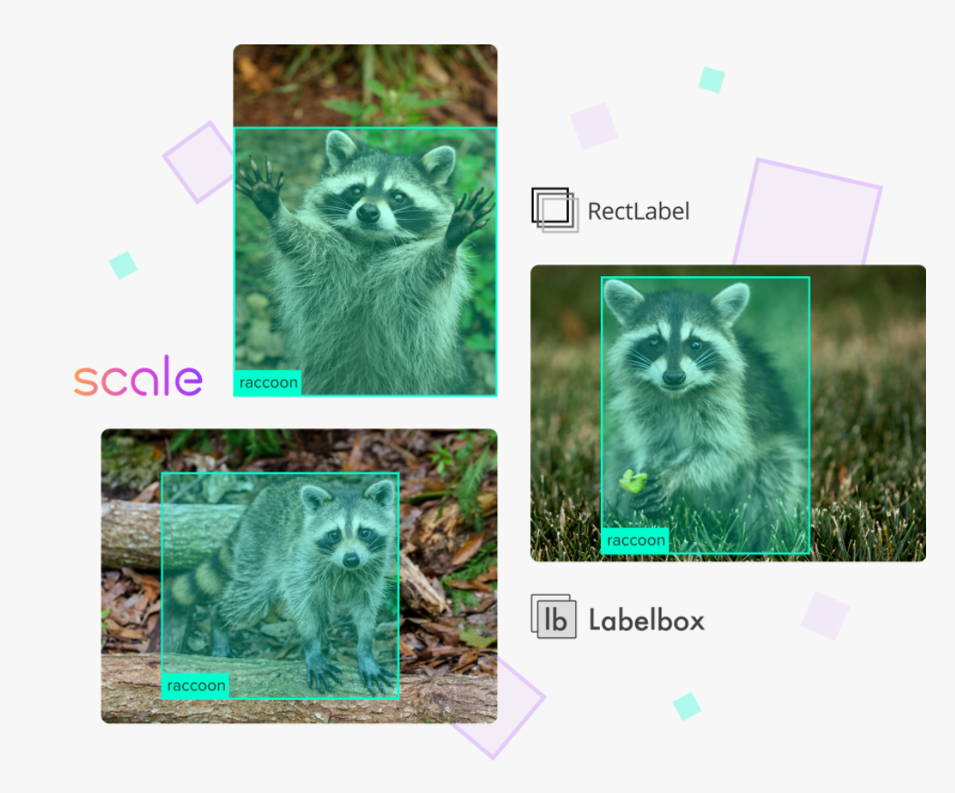 Three images of a raccoon with teal bounding boxes around each raccoon.